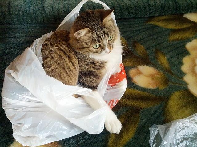 Kat in zak